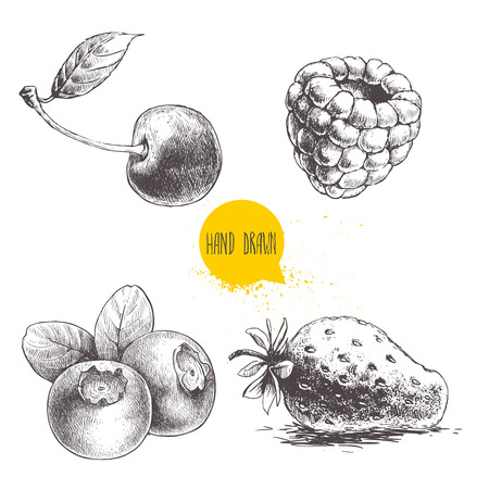 wild strawberry: Hand drawn sketch style berries setisolated on white background. Raspberry, strawberry, cherry and blueberry. Healthy fruit and berry vector illustration.