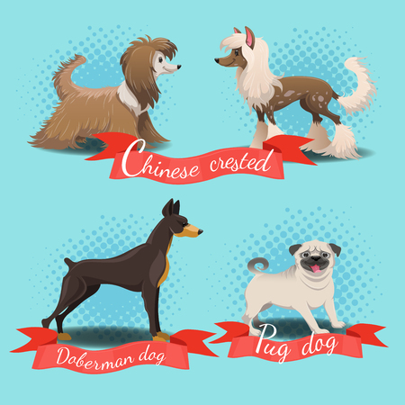 Cartoon different dog breed set. Chinese crested, chinese crested powder puff, pug dog, doberman dog.