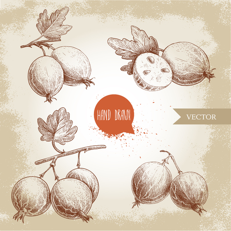Hand drawn sketch style set of gooseberries. Gooseberries branch with leaf, group of gooseberries and sliced berries. Healthy berry vintage vector illustration.