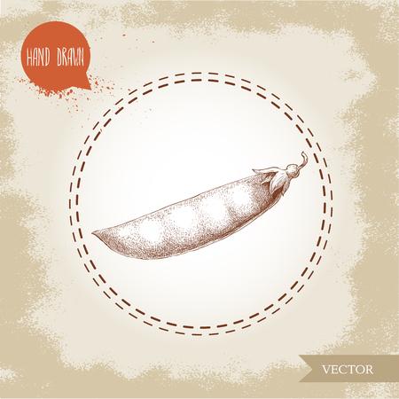 Hand drawn sketch pea pod. Vector organic food illustration on grunge vintage background.