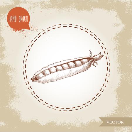 Hand drawn sketch pea pod with seeds inside. Vector organic food illustration on grunge vintage background.