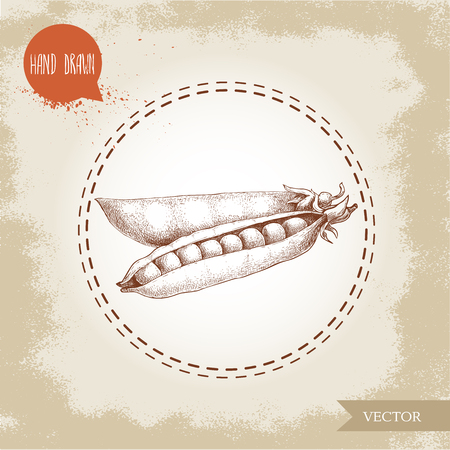 Hand drawn sketch pea pod group. Vector organic food illustration on grunge vintage background.
