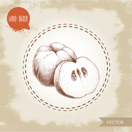 Hand drawn sketch style illustration of quince, half quince. Vector fruit illustration. Illustration