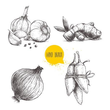 L'esquisse dessinée à la main illustre l'illustration de différentes épices isolées sur fond blanc. Les ail avec des clous de girofle et des poivrons noirs, des poivrons de racine de gingembre, d'oignon et de jalapeno. Banque d'images - 76712060