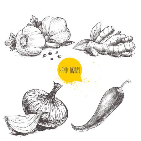 손으로 그린 스케치 스타일 설정 흰색 배경에 고립 된 다른 향신료의 그림입니다. 검은 고추, 생강 뿌리, 양파와 레드 핫 칠리 페 퍼와 마늘.