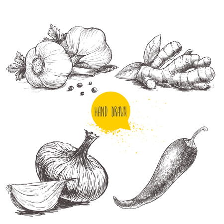 Hand drawn sketch style set illustration of different spices isolated on white background. Garlics with black peppers, ginger root, onion and red hot chili pepper. Vettoriali