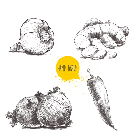 Hand drawn sketch style set illustration of different spices isolated on white background. Garlic, ginger root with slices, onions and red hot chili pepper.
