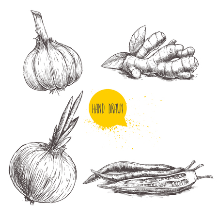 Hand drawn sketch style set illustration of different spices isolated on white background. Garlic, ginger root, onion and red hot chili peppers.