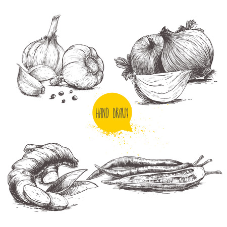 Hand drawn sketch style set illustration of different spices isolated on white background. Garlics with cloves and black peppers, ginger root, onions and sliced red hot chili peppers.