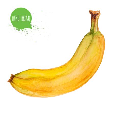 水彩描画と彩色の熟したバナナを手します。