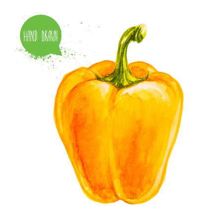 Hand drawn and painted watercolor ripe yellow bell pepper Imagens