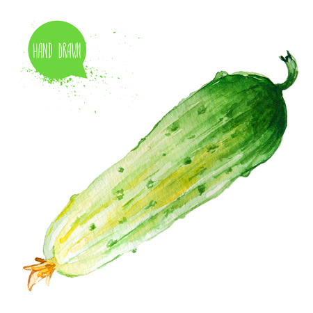 Hand drawn and painted watercolor green cucumber