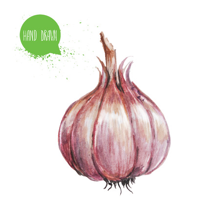 Hand drawn and painted watercolor green garlic