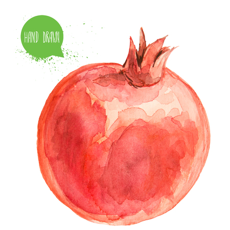 Hand drawn and painted watercolor pomegranate Фото со стока