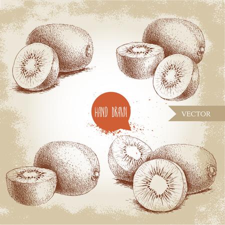 手描きキウイ フルーツ ベクトル イラスト セット。グランジ背景に分離したスタイルのベクトル デザインをスケッチします。熱帯のフルーツ。