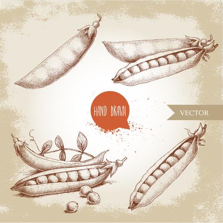 Hand drawn sketch peas sketch set. Vector organic food illustration on grunge vintage background. Illustration