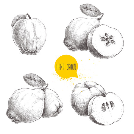 jam tarts: Hand drawn sketch style set of quinces. Quince apple with leaf, group of quinces and sliced quince. Eco fruit vintage vector illustration isolated on white background.