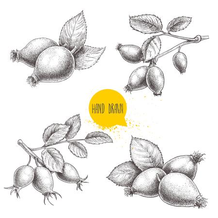 Hand gezeichneter Satz Skizzenarthagebuttenillustrationen. Zweig mit Beeren und Blättern. Gesundheitsvektorabbildung getrennt auf weißem Hintergrund.