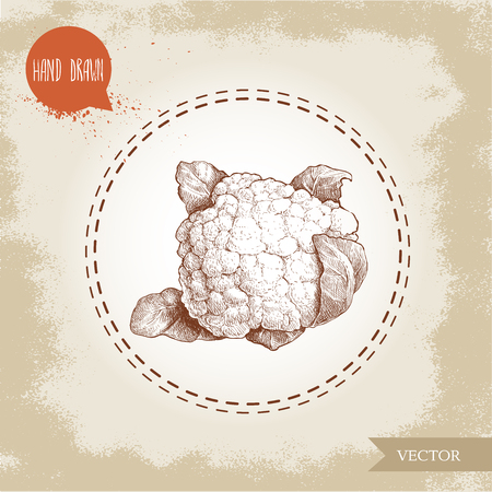 Hand drawn sketch style cauliflower. Vector eco food illustration isolated on grunge old background.