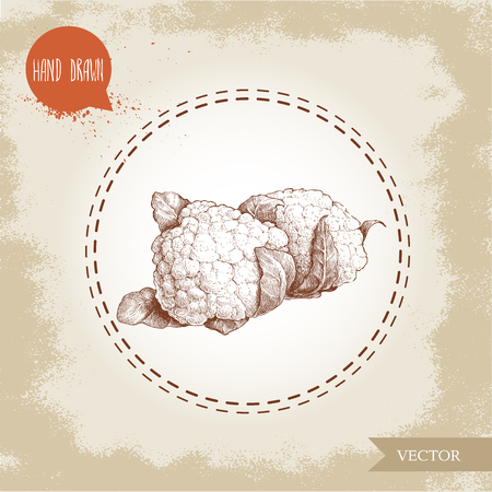 brassica: Hand drawn sketch style cauliflowers. Vector farm fresh food illustration isolated on grunge old background.