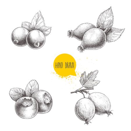 Hand drawn sketch style berries set.