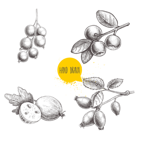 Hand drawn sketch style berries set.