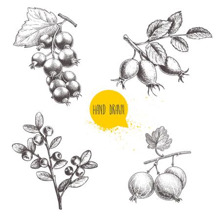 Hand gezeichnete Skizze Stil Beeren Set.