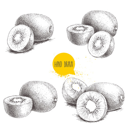 Hand drawn kiwi fruit vector illustration set. Sketch style vector design isolated on white background. Tropic fruit.