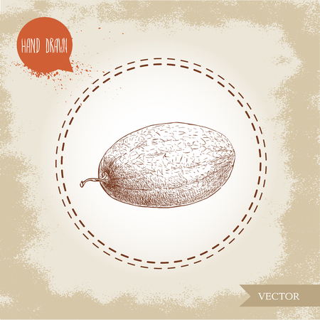 Hand drawn sketch style illustration of melon. Organic food vector illustration. Иллюстрация