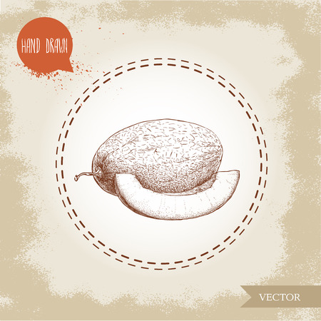 Hand drawn sketch style illustration of melon and melon slice. Organic food vector illustration. Ilustração