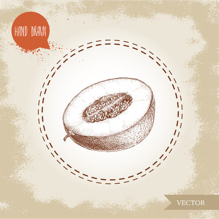 Hand drawn sketch style illustration half of melon. Organic food vector illustration.