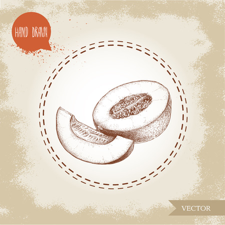 Hand drawn sketch style illustration half of ripe melon and melon slice. Organic food vector illustration.