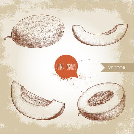 手描きスケッチ スタイルのイラストは、熟したメロンとメロンのスライスのセット。有機食品のベクトル図です。