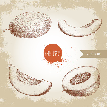 Hand gezeichnet Skizze Stil Illustration Satz von reifen Melonen und Melone Scheiben. Bio-Lebensmittel Vektor-Illustration. Standard-Bild - 81188438
