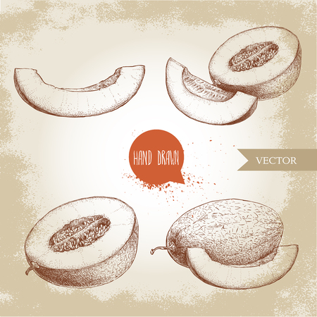 Hand drawn sketch style illustration set of ripe melons and melon slices. Organic food vector illustration.