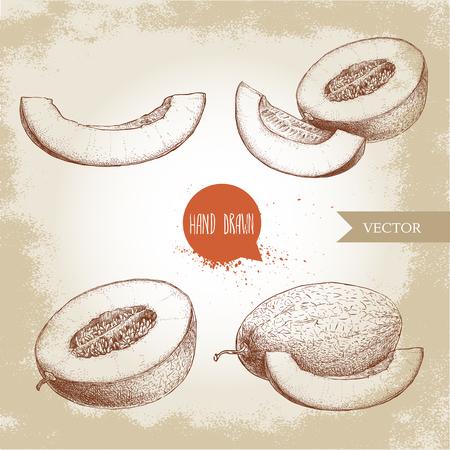 Hand gezeichnet Skizze Stil Illustration Satz von reifen Melonen und Melone Scheiben. Bio-Lebensmittel Vektor-Illustration. Standard-Bild - 81188442