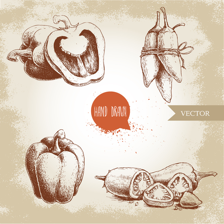 Hand drawn sketch collection of different types of pepper. Bell sweet peppers composition, sliced hot chili peppers and jalapeno peppers bunch . Vintage market fresh vegetables set. Spicy food. Ilustracja