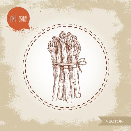 Handgetekende schetsstijl aspergesbos. Biologische voedsel boerderij verse vector illustratie op vintage achtergrond.