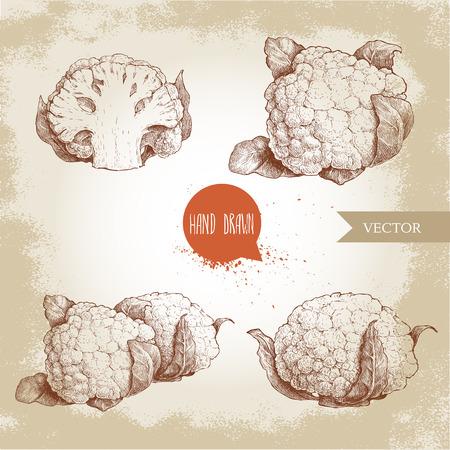 Hand drawn sketch style cauliflowers set. Vector farm fresh food illustration isolated on grunge old background. Illustration