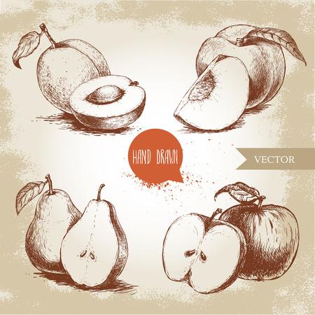 손으로 그린 스케치 스타일 과일 집합입니다. 살구, 복숭아, 반 배, 사과. 에코 음식 벡터 일러스트 오래 된 배경에 컬렉션입니다.