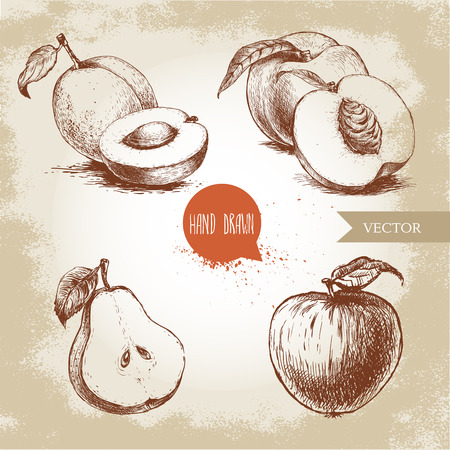 Hand drawn sketch style fruits set. Apricots, peaches , half pear, apple. Eco food vector illustration collection on old background.