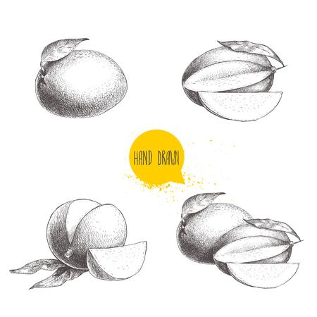 手描きのマンゴー入り果物の葉とスライス。イラスト ベクター フルーツ白い背景の分離をスケッチします。エコ食品。