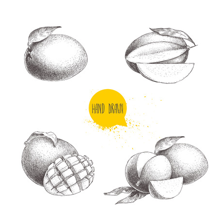 손으로 그린 망고 열매 집합 leafs 및 망고 슬라이스 및 큐브. 스케치 스타일 벡터 과일 그림 흰색 배경에 고립. 유기농 식품.
