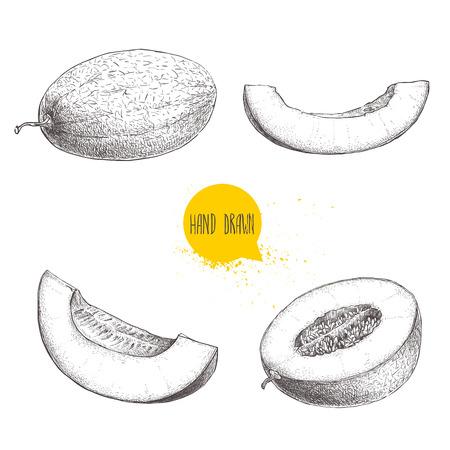 手描きスケッチ スタイルのイラストは、熟したメロンとメロンのスライスのセット。有機食品ベクトル イラスト白背景に分離されました。  イラスト・ベクター素材