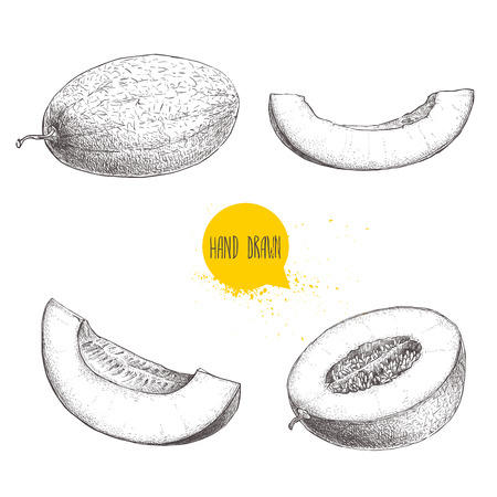 Hand drawn sketch style illustration set of ripe melons and melon slices. Organic food vector illustrations isolated on white background.