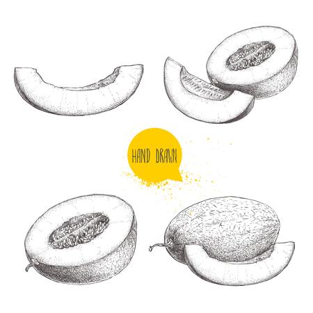 手描きスケッチ スタイルのイラストは、熟したメロンとメロンのスライスのセット。エコ食品ベクトル イラスト白背景に分離されました。  イラスト・ベクター素材