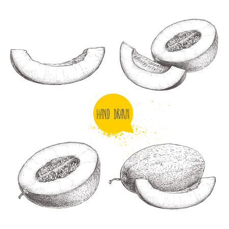 Hand drawn sketch style illustration set of ripe melons and melon slices. Eco food vector illustrations isolated on white background.