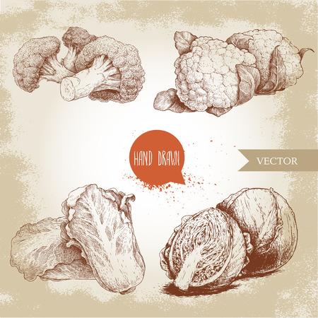 Hand getrokken schets kolen ingesteld. Kool met half, bloemkool, broccoli en chinese kool pe-tsai composities. Organisch vers landbouwbedrijfvoedsel dat op oude het kijken achtergrond wordt geïsoleerd.