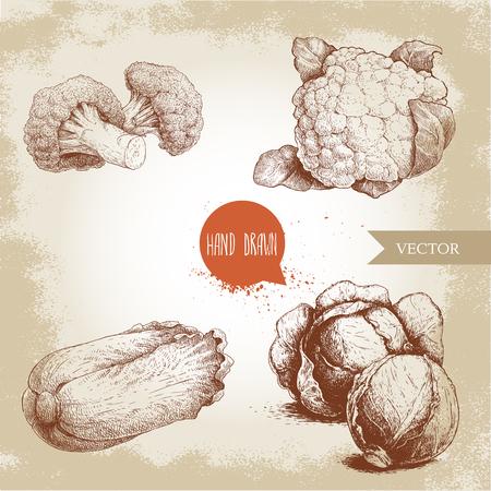 手描きスケッチ スタイル キャベツ セット。キャベツ頭、カリフラワー、ブロッコリー、白菜 pe-tsai 組成物。古いの探している背景に分離された有  イラスト・ベクター素材