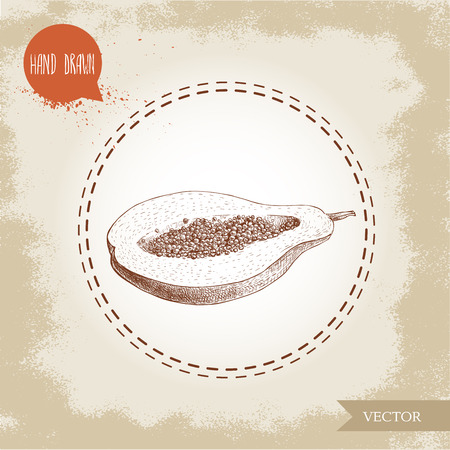 Hand drawn half of papaya fruit with seeds. Sketch style vintage vector illustration of summer exotic food.